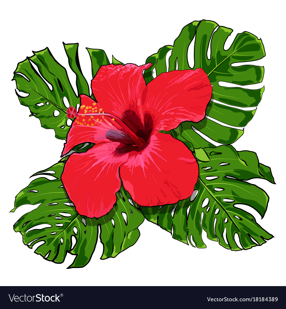 Beautiful Tropical Flowers Bouquet Royalty Free Vector Image