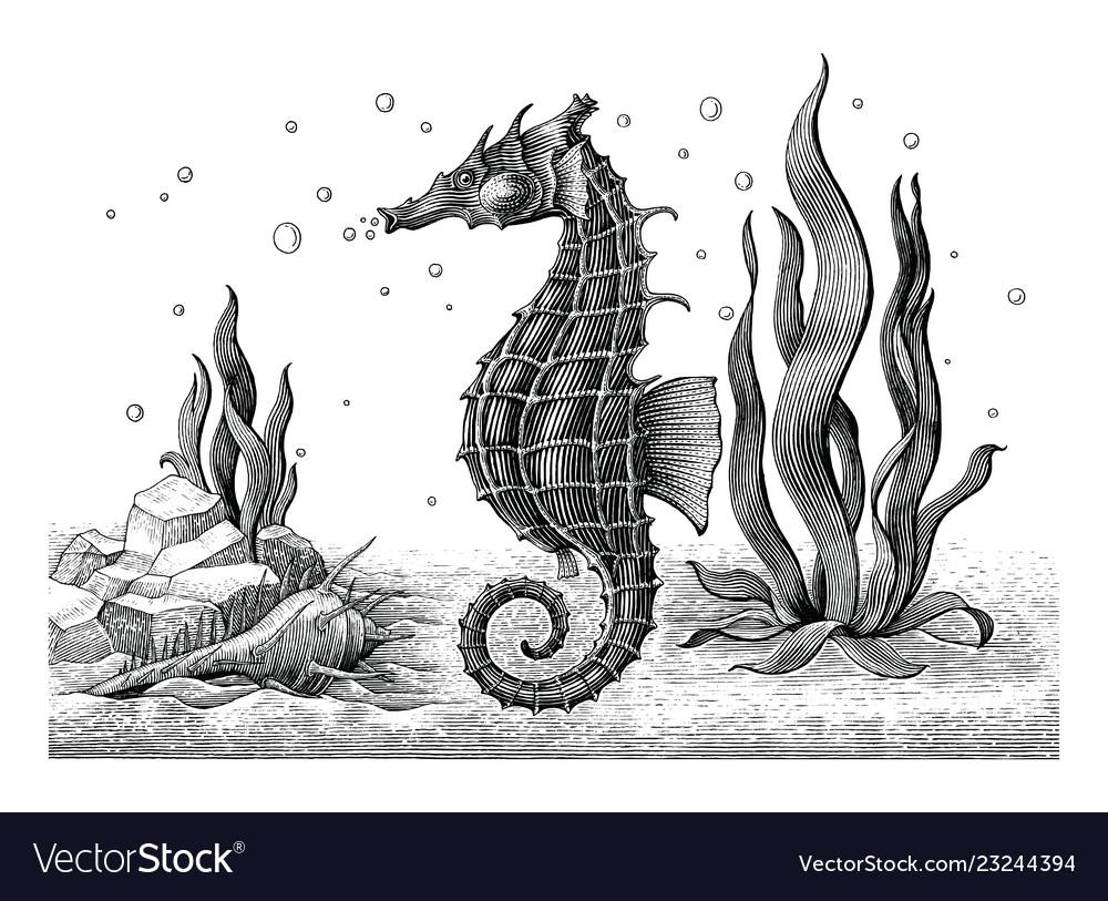 Sea horse hand drawing vintage engraving
