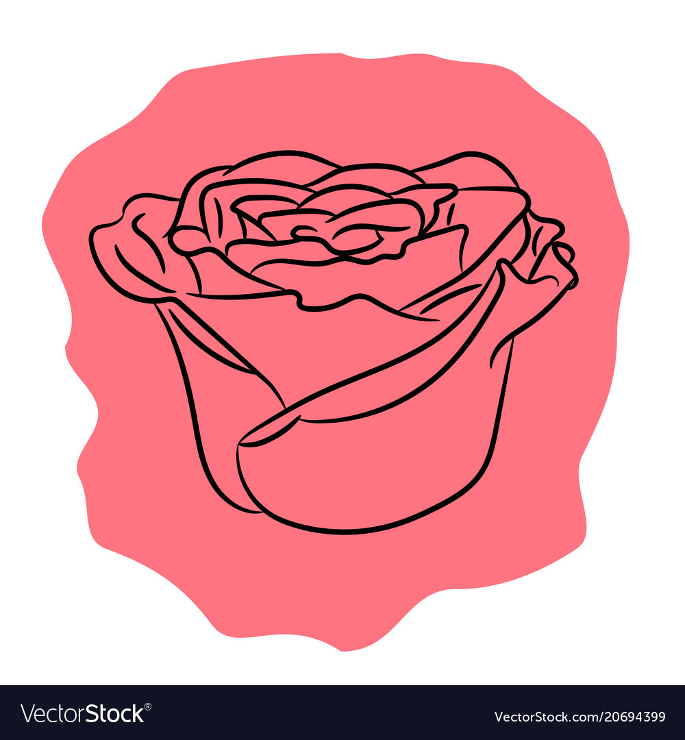 Bud flower rose from the contour black lines of