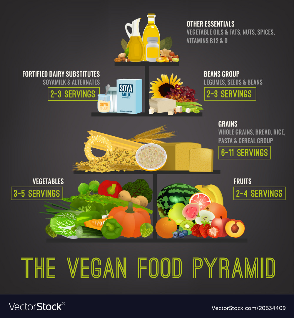 plant based diet pyramid vector image