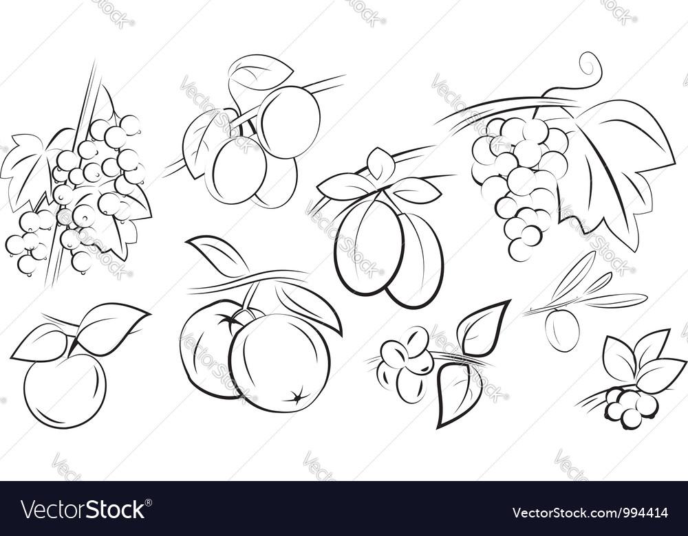 Fruits berries set vector image