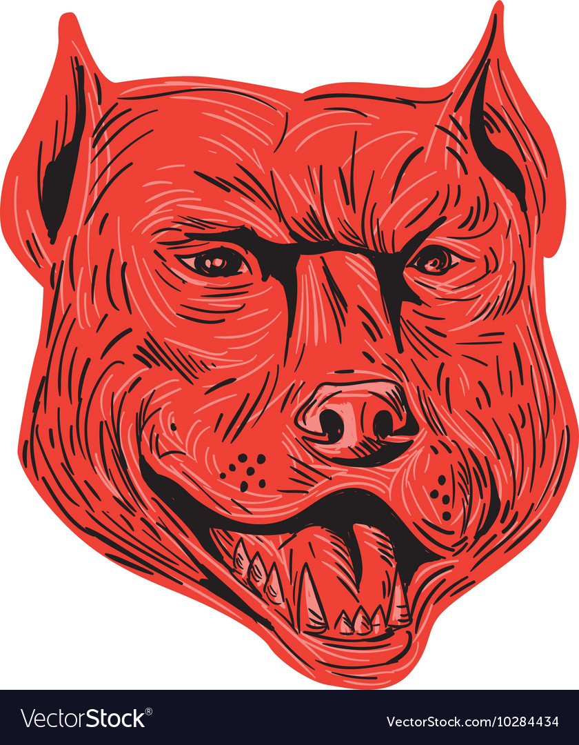 Pitbull Dog Mongrel Head Drawing vector image