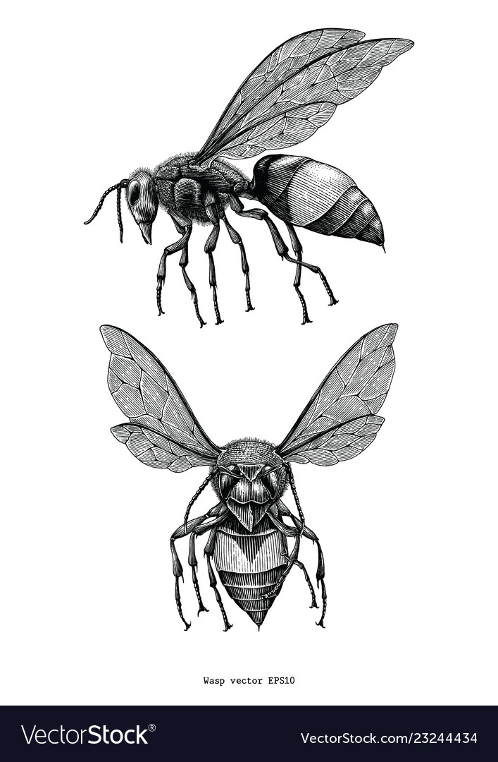 Wasp hand draw vintage clip art isolated on white