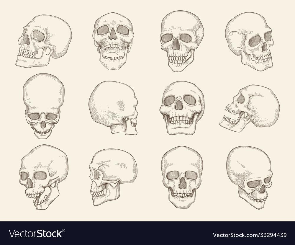 Human skull anatomy pictures head bones