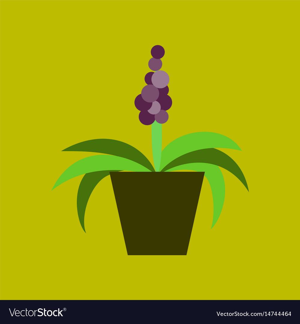 Icon in flat design hyacinth