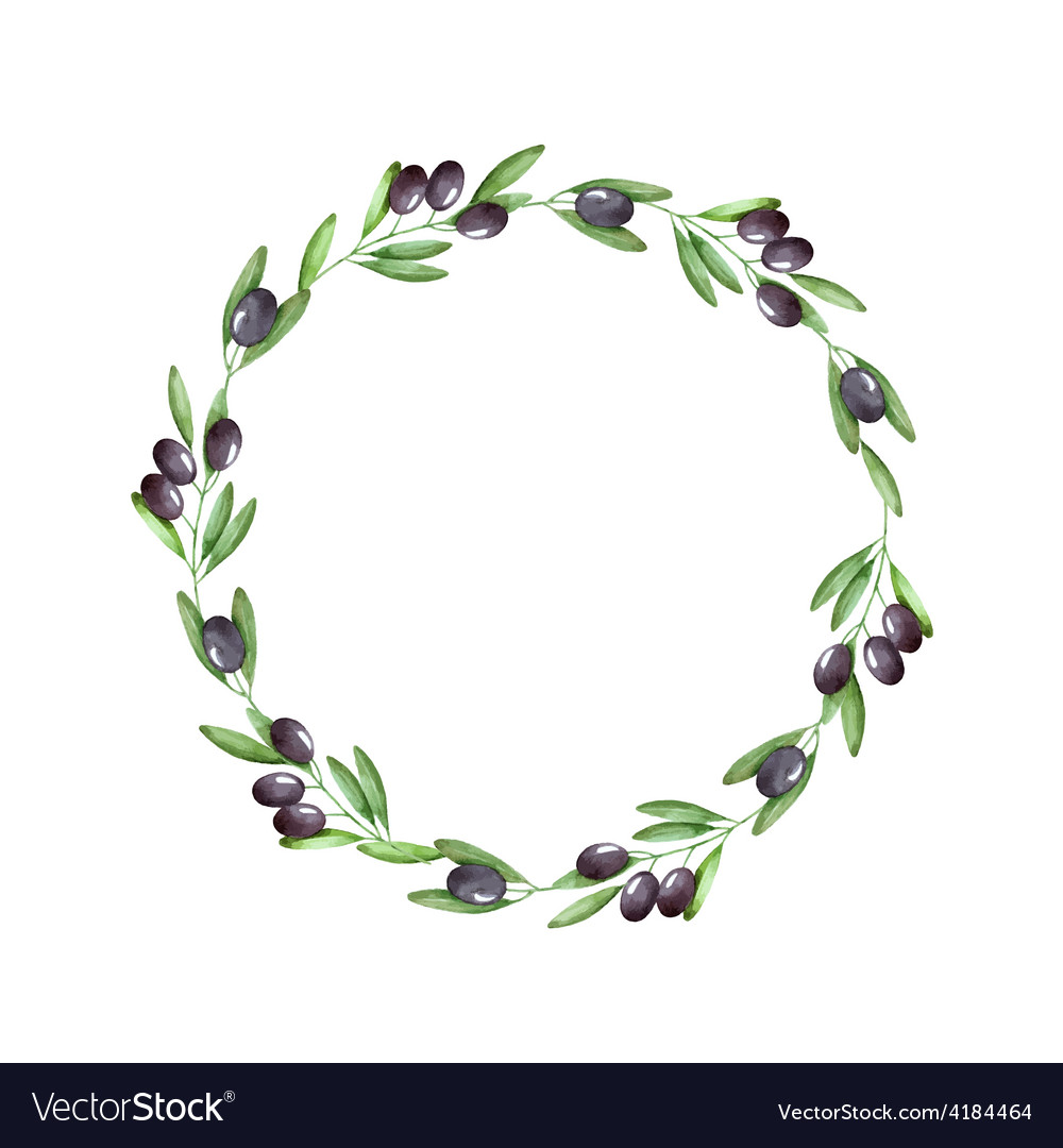 Watercolor olive branch wreath vector image