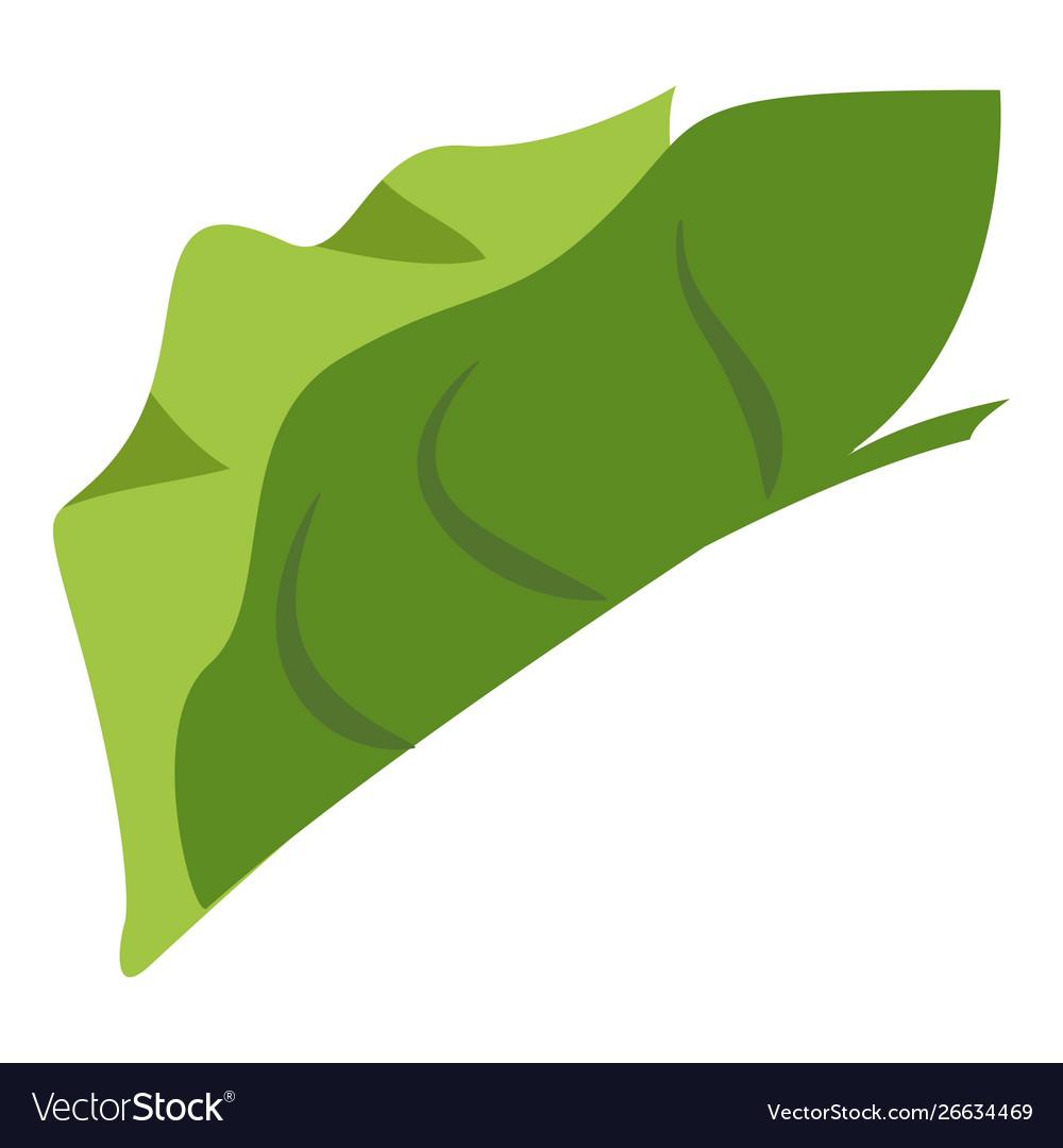 Tropical elephant ear leaf icon cartoon style