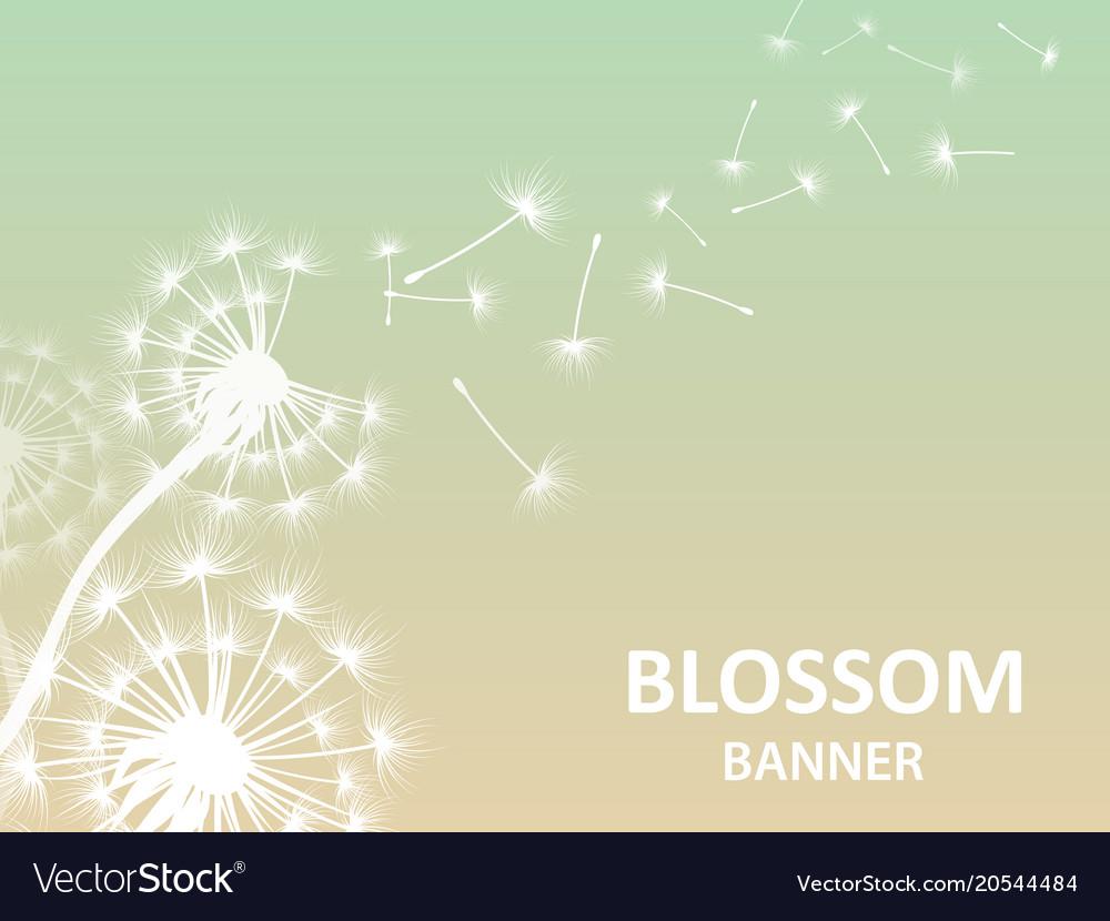 Blossom banner background with dandelion white