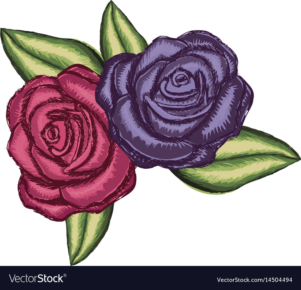 Realistic flower red rose and purple rose with vector image