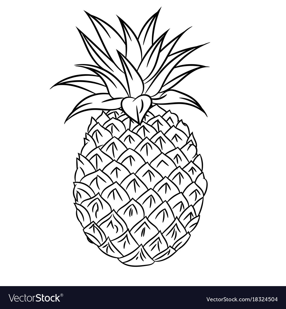 Line Drawing Of Mangosteen Simple Line Royalty Free Vector