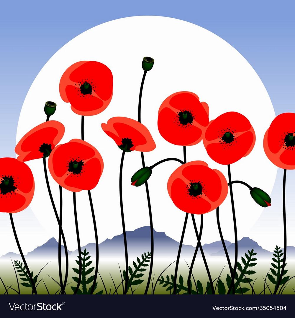 Poppy flowers image