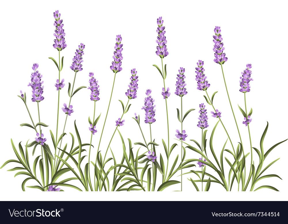 Wreath of lavender flowers