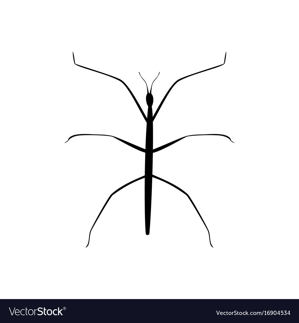 Stick insect black silhouette animal