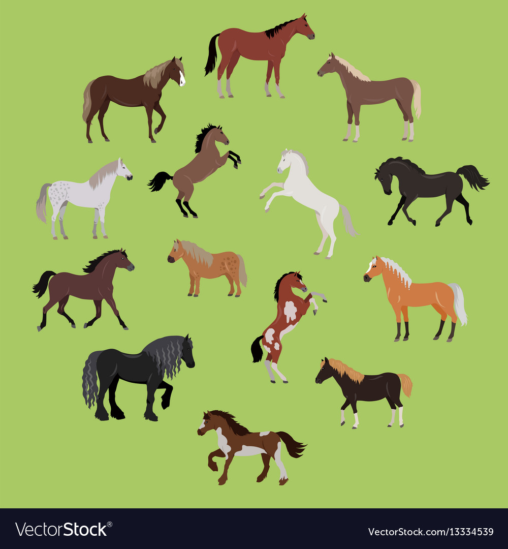 Different breeds of horses