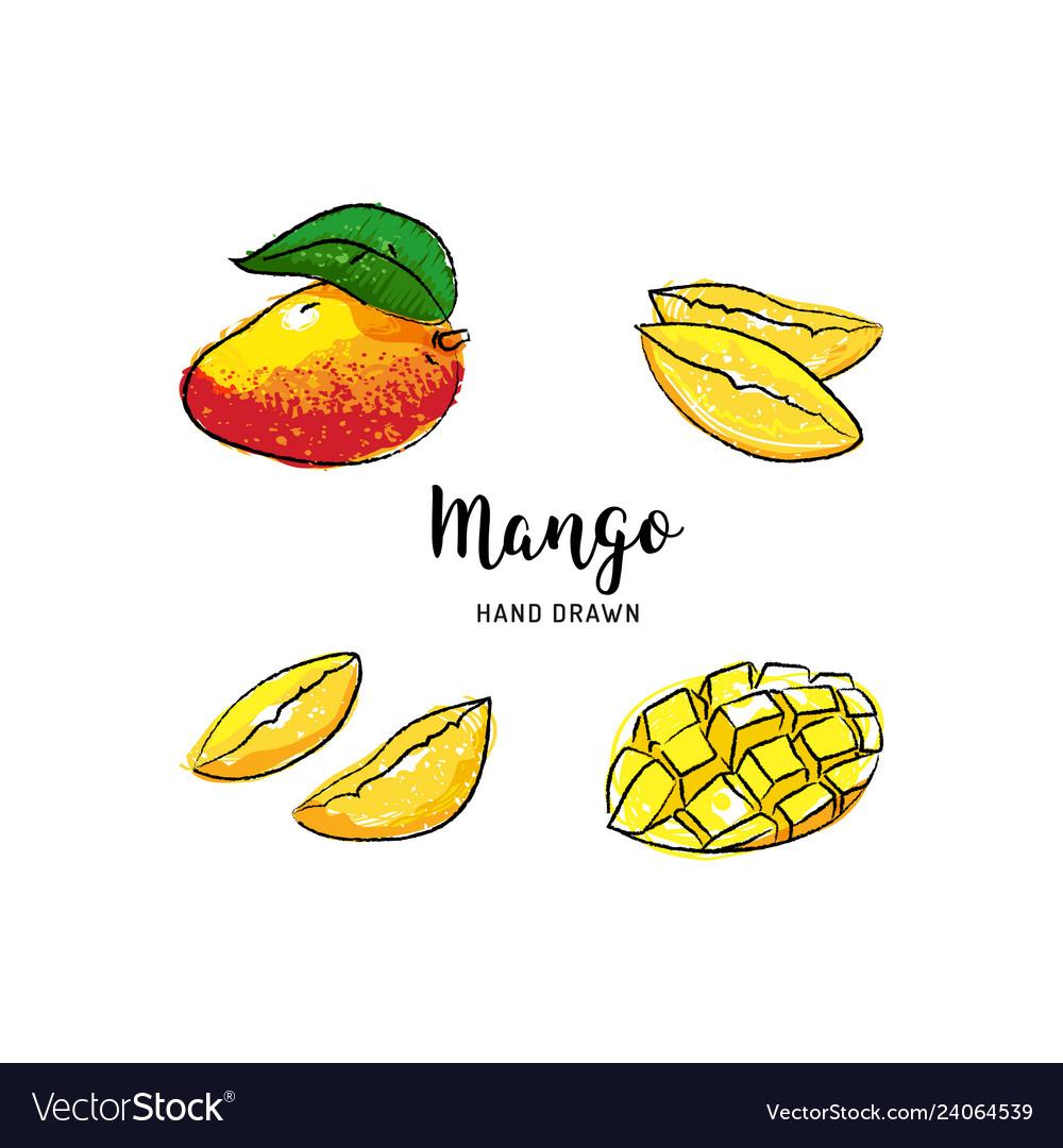 Mango fruit drawing hand drawn mango