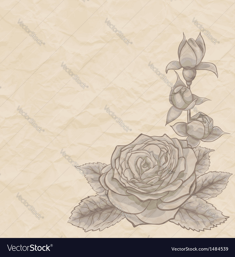 Vintage background Beautiful rose in the corner