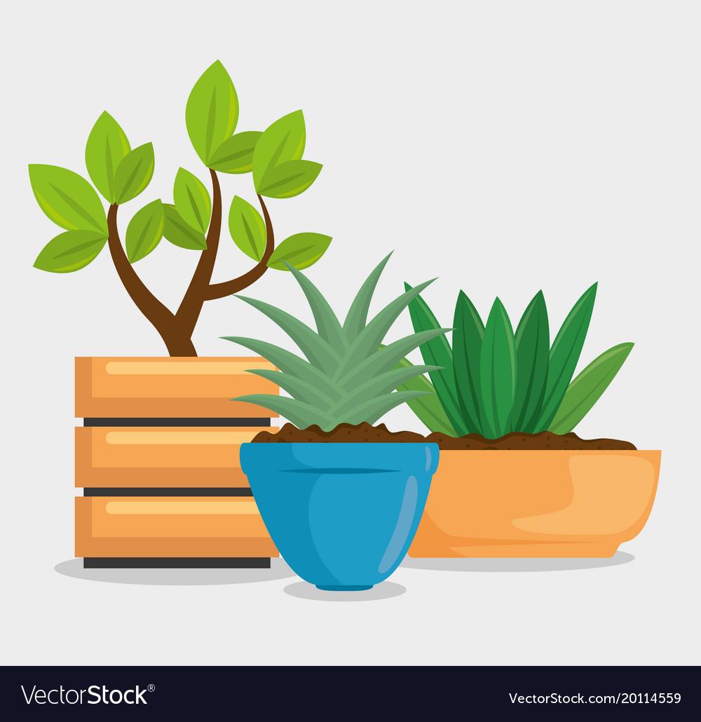 Cute houseplant in pot
