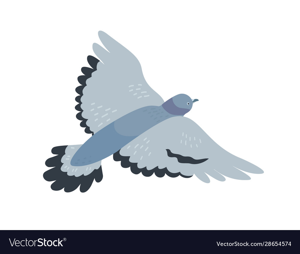 Flying pigeon flat free vector