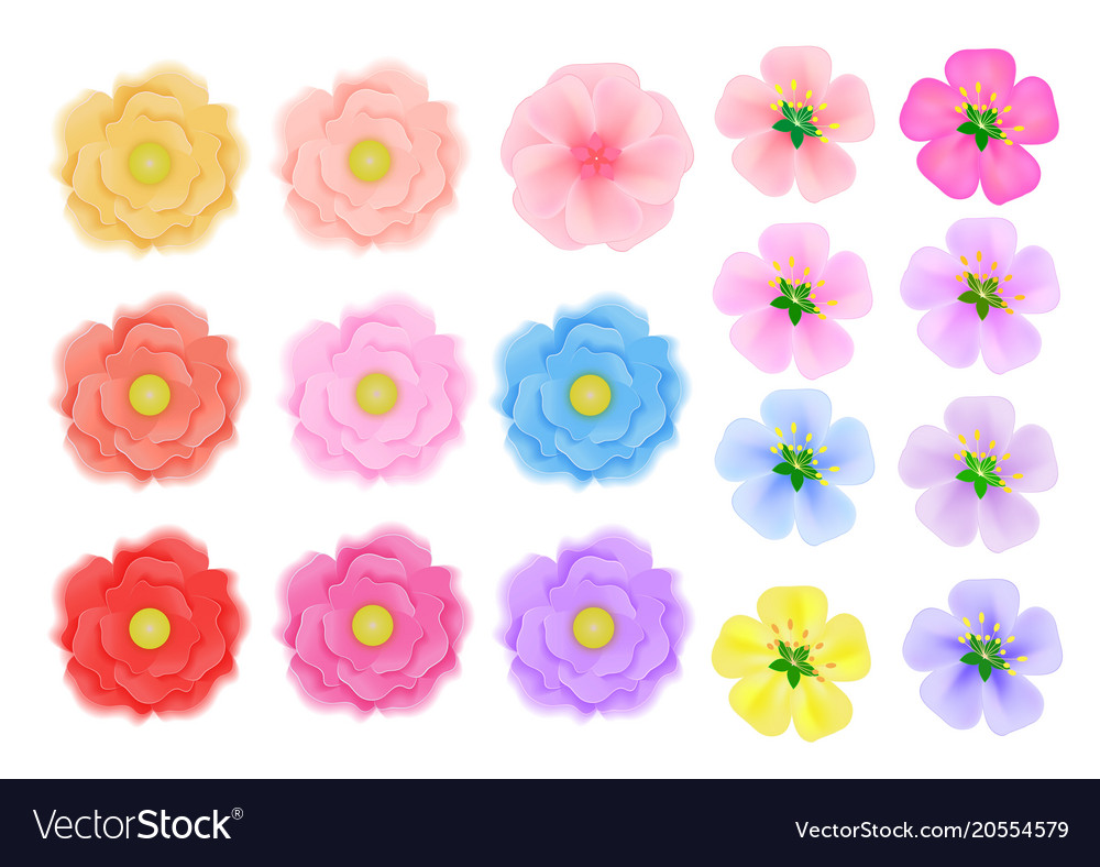 Colored flowers of three kinds on a white vector image mightylinksfo