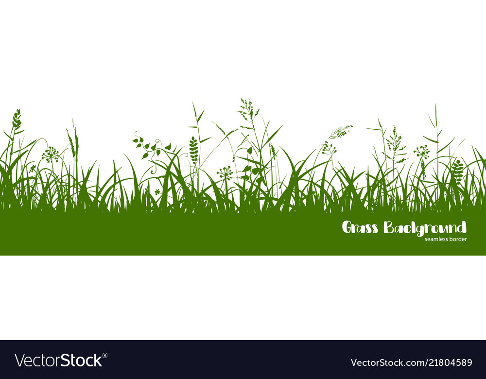 Silhouettes of green grass spikes and herbs