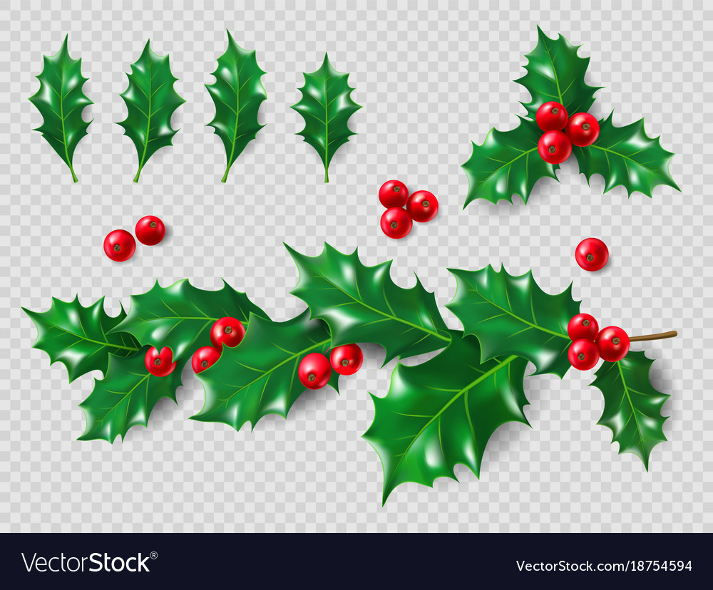 Holly set realistic leaves branch red berries