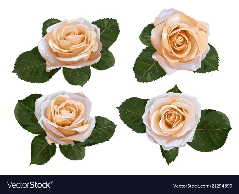 Set watercolor tea roses isolated on white