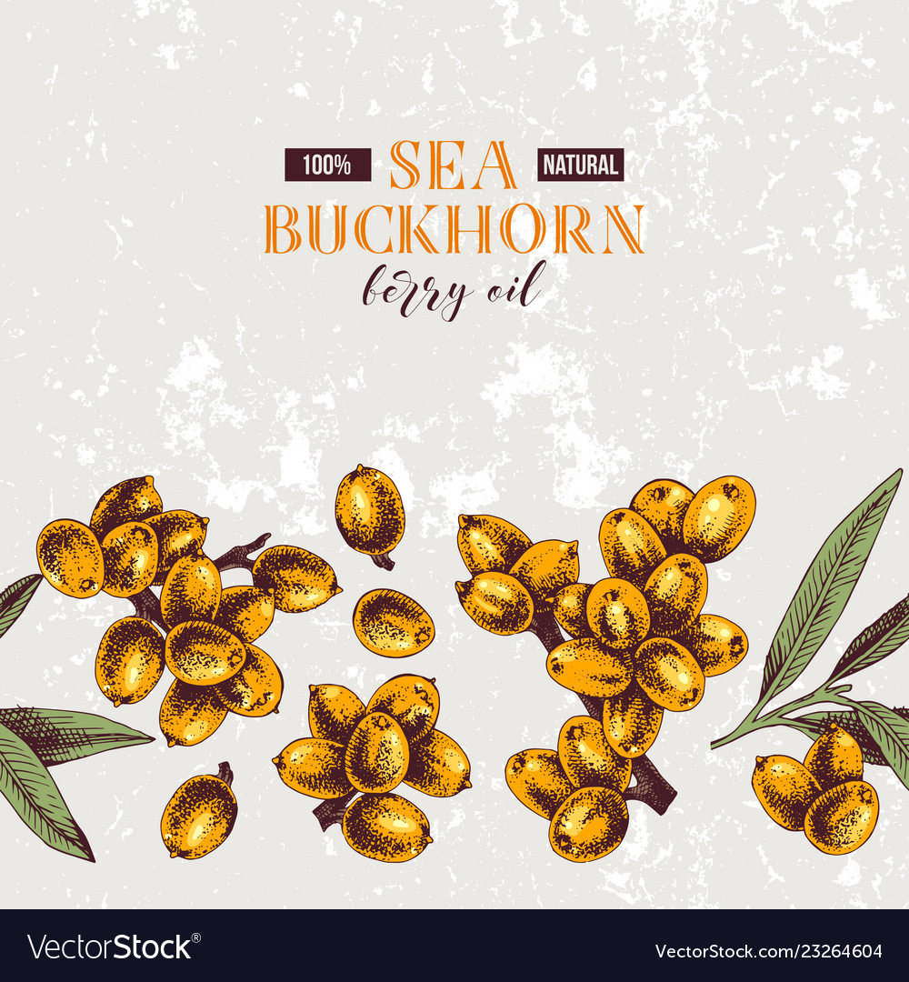 Background with seamless sea buckthorn border