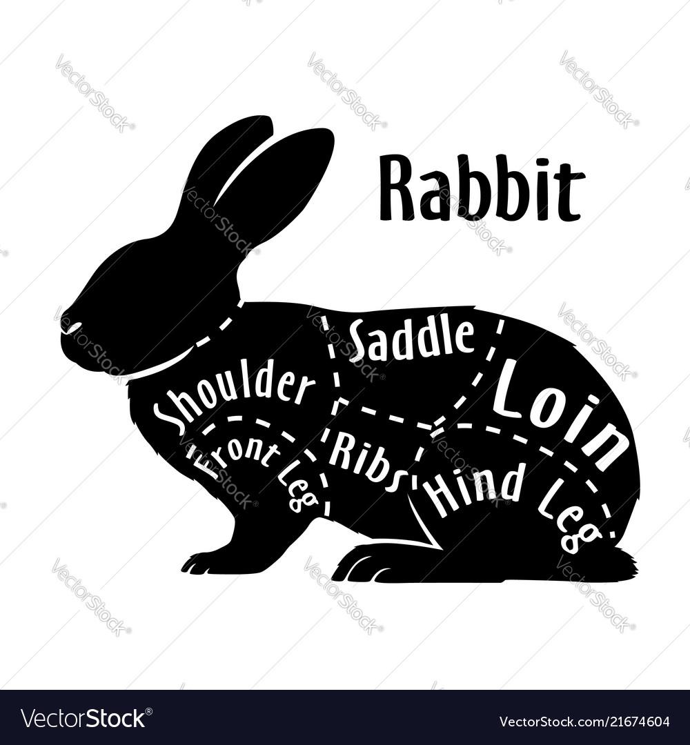 cut of rabbit diagram for butcher rabbit cut vector 21674604 cut of rabbit diagram for butcher rabbit cut vector image