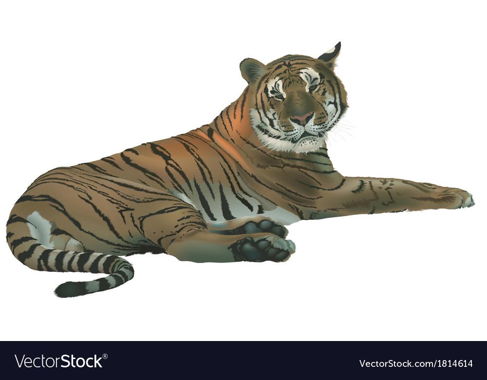 Laying Tiger vector image
