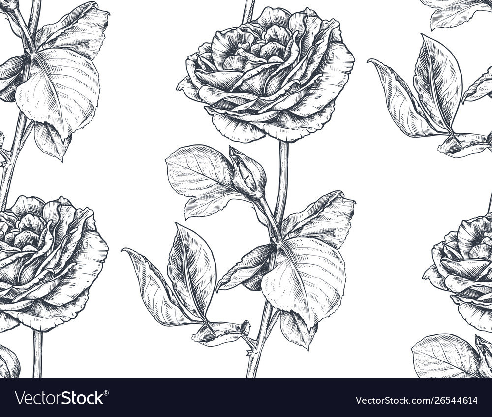 Seamless pattern with hand drawn rose