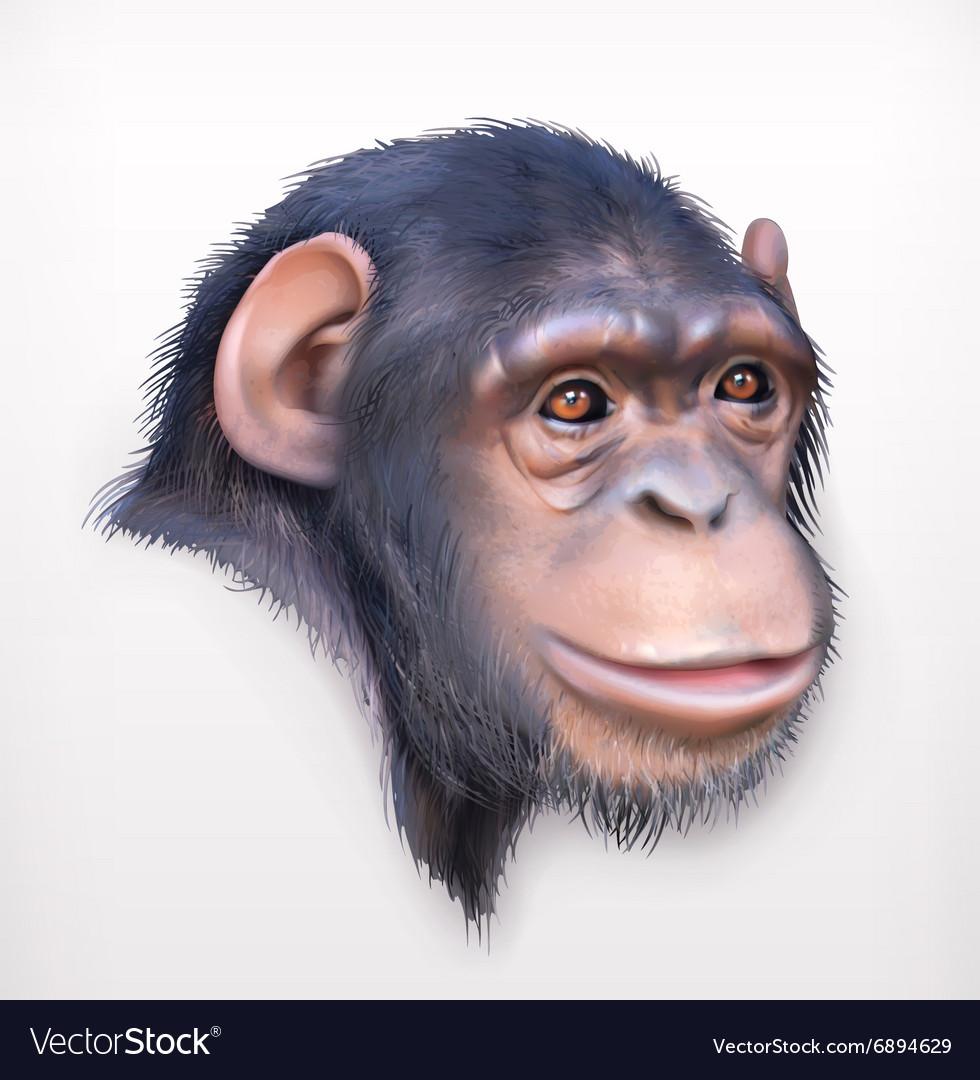 Chimpanzee head realistic