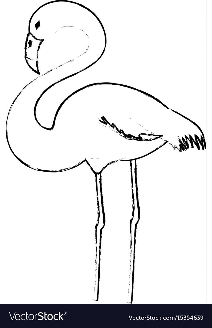 Flamingo exotic bird