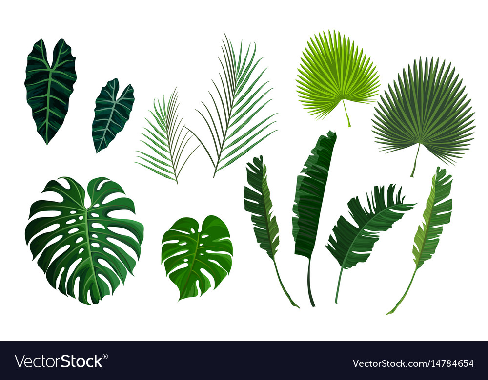 Tropical palm leaves jungle leaves set vector image