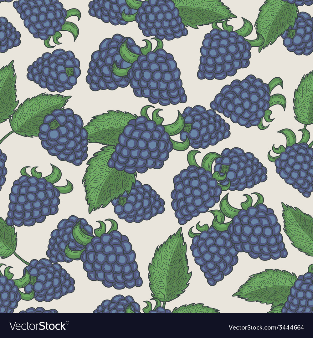Doodle blackberries seamless pattern vector image