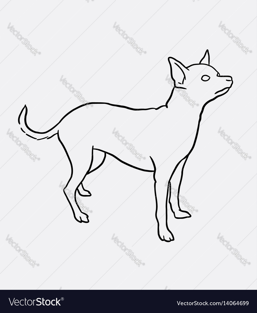 Chihuahua pet dog sketches vector image