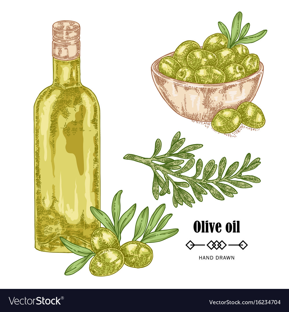 Hand drawn olive branch and olive oil in glass
