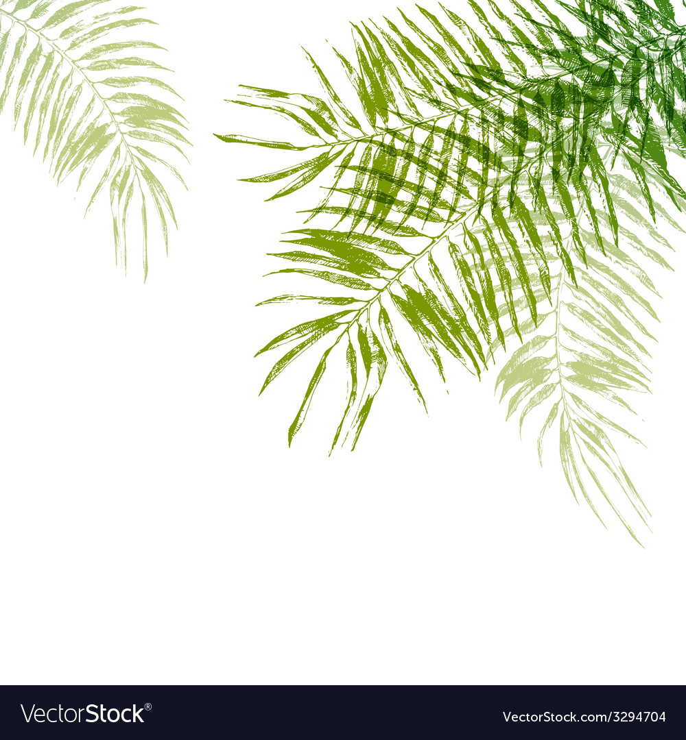 Hand drawn palm tree leaves vector image