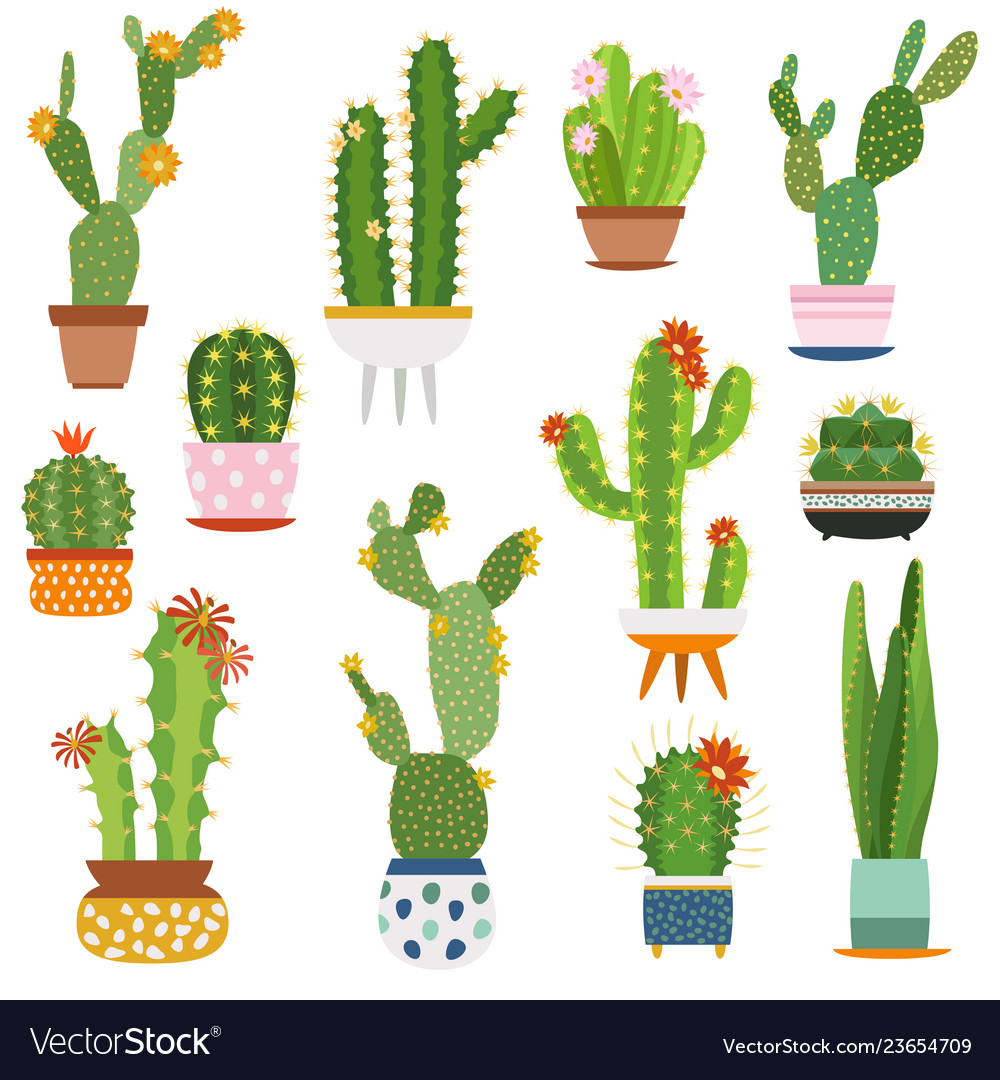 Cactus pots home plants cacti flowers in ceramic vector