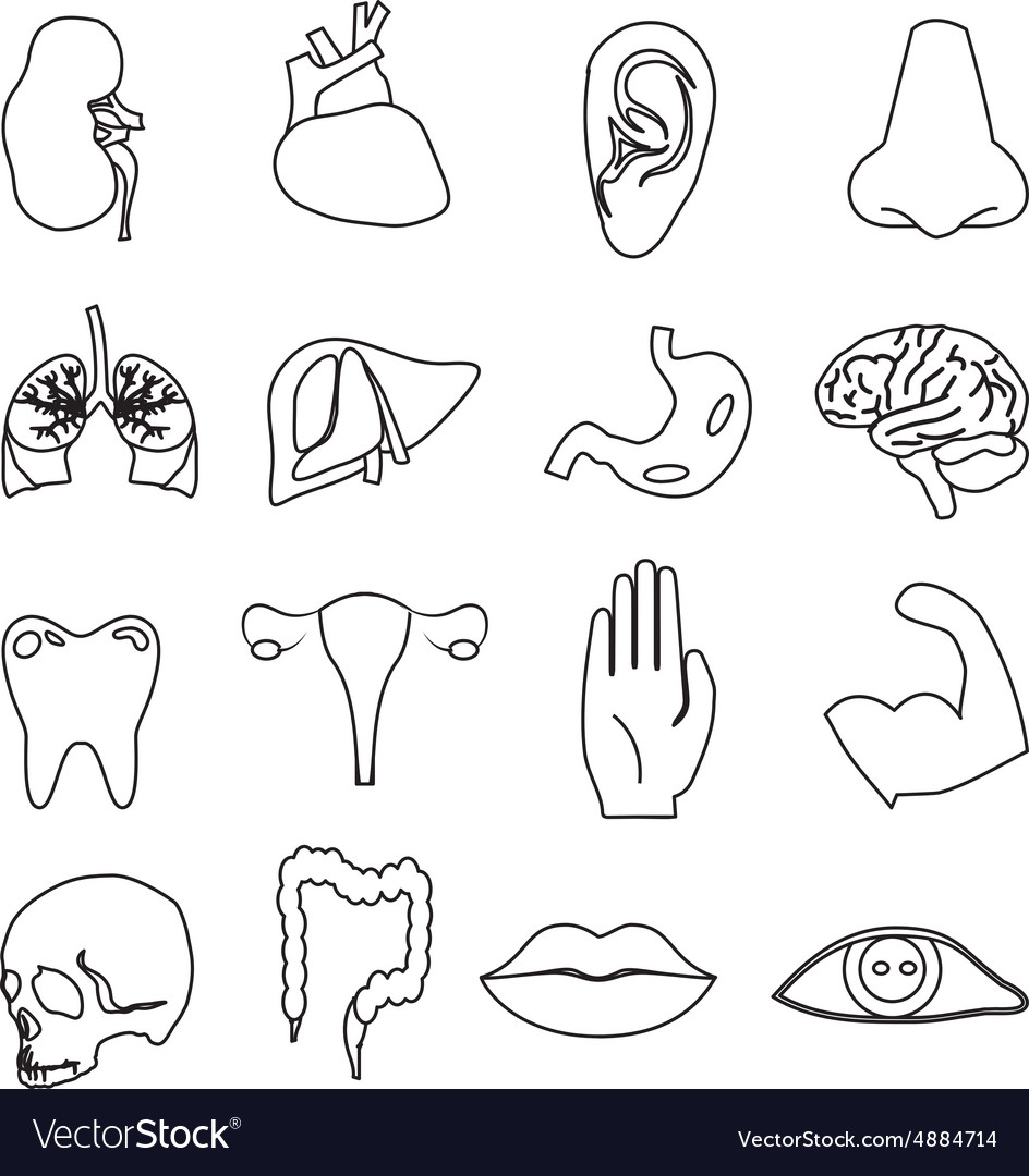 Body parts line icons set