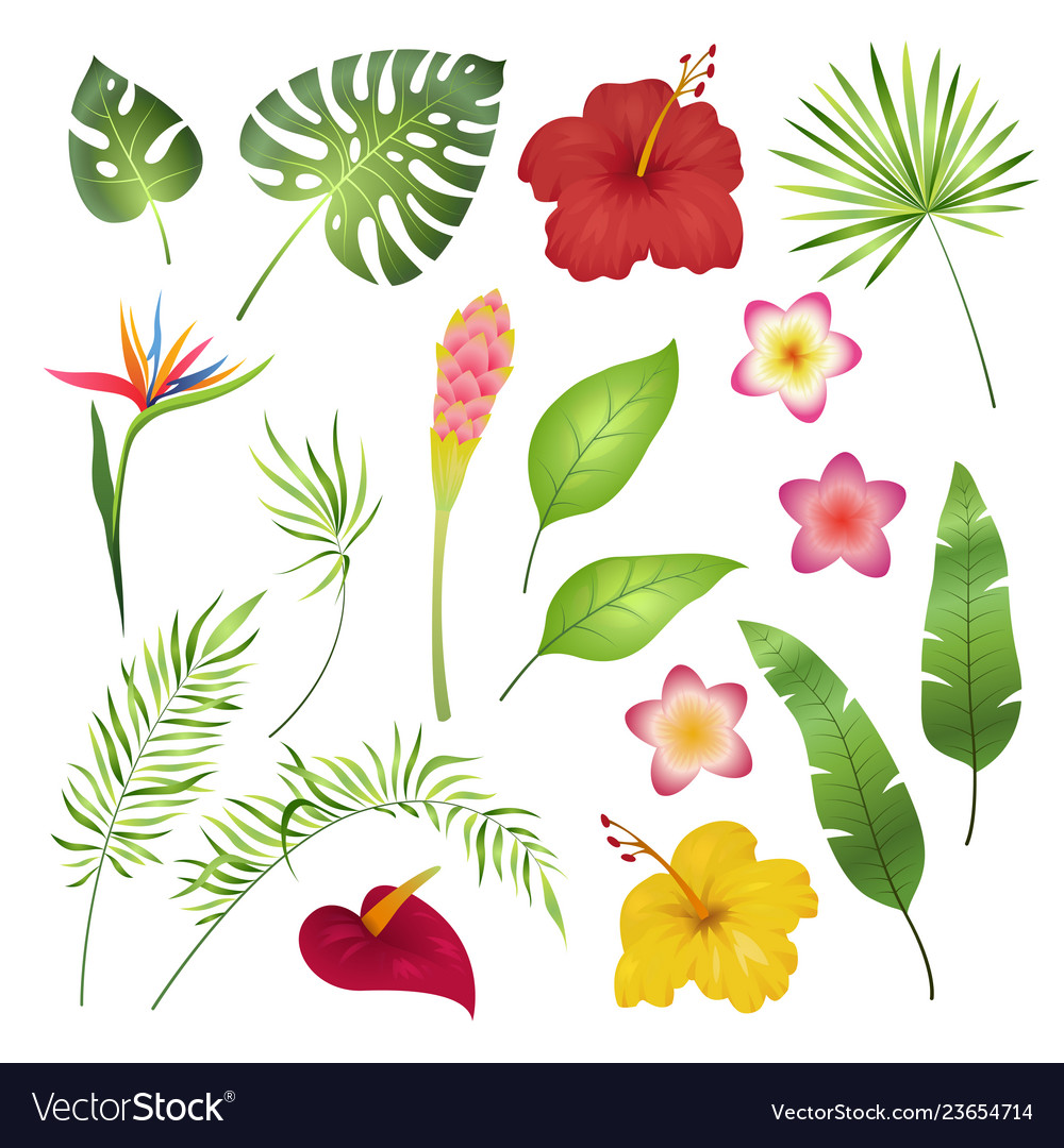 Tropical flowers and leaves caribbean tropical