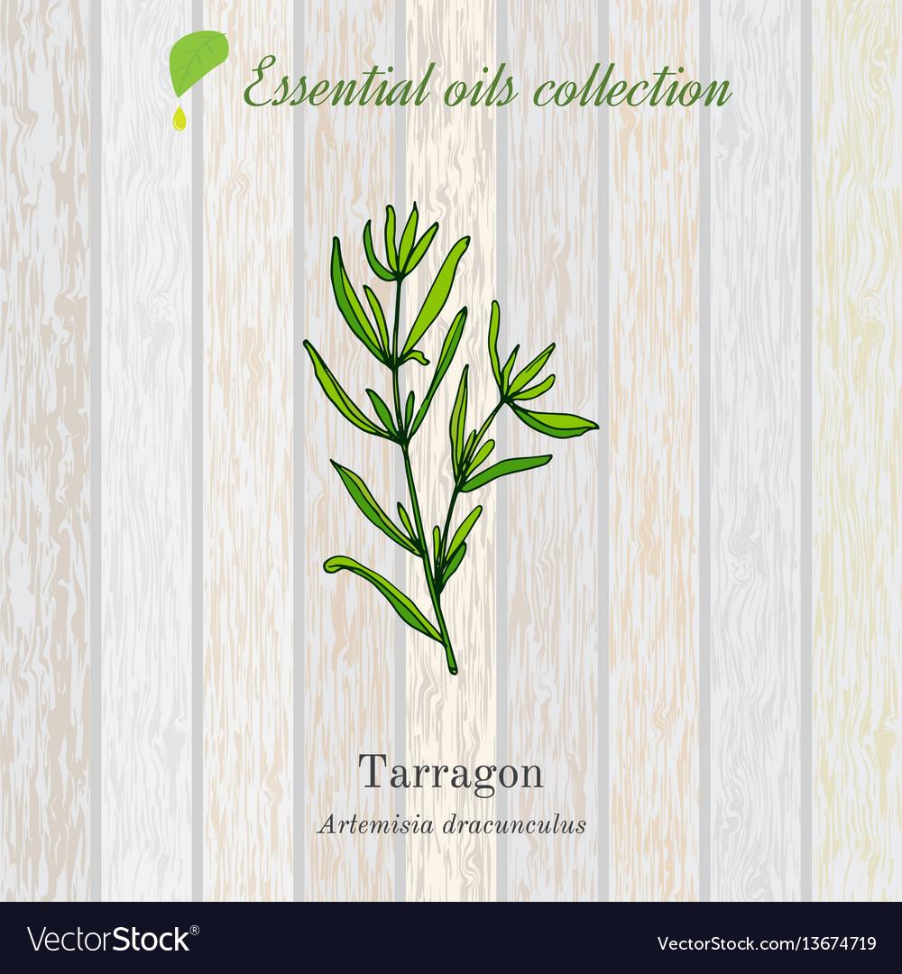 Tarragon essential oil label aromatic plant