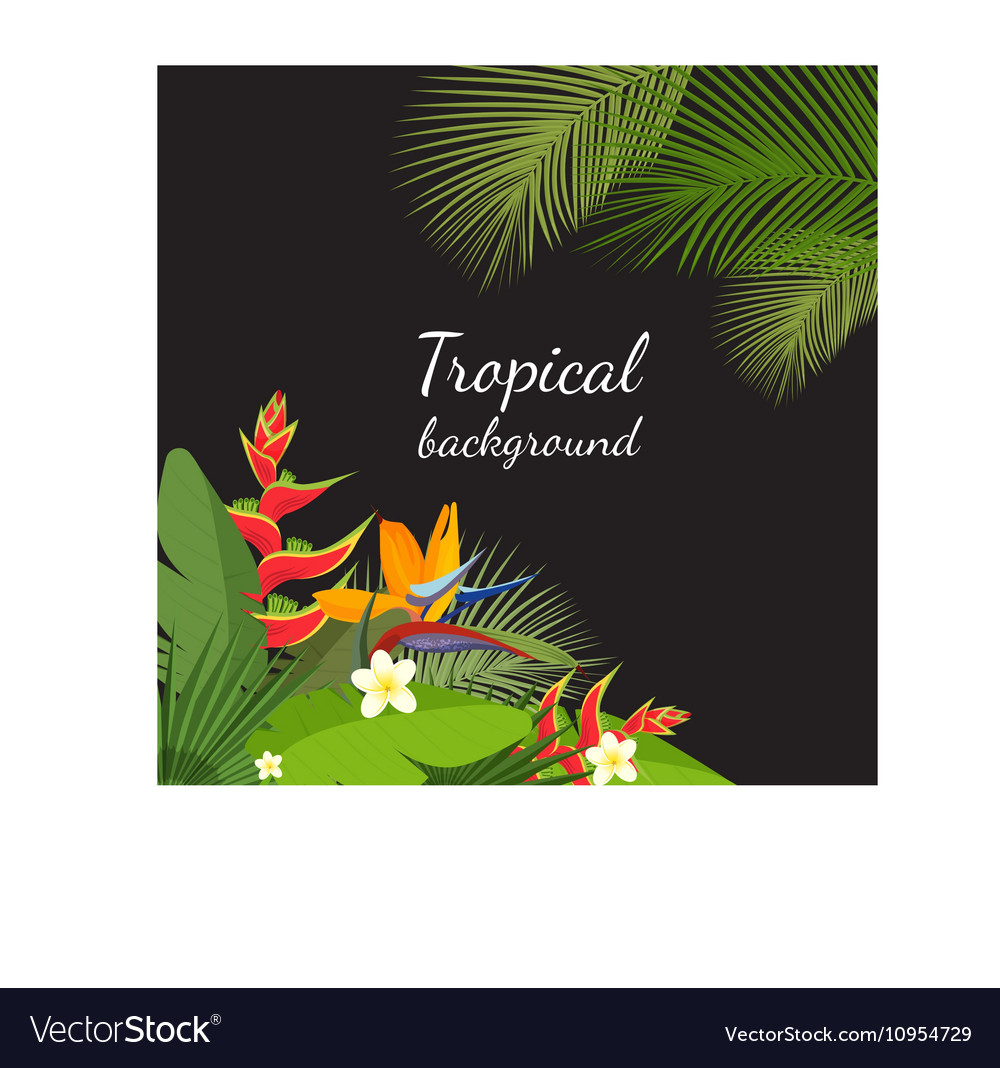 Colorful tropical flower plant and leaf pattern