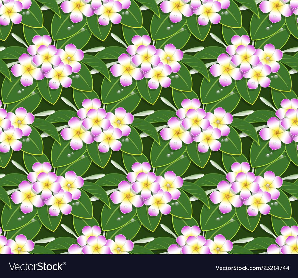 Pink plumeria flower pattern seamless on green