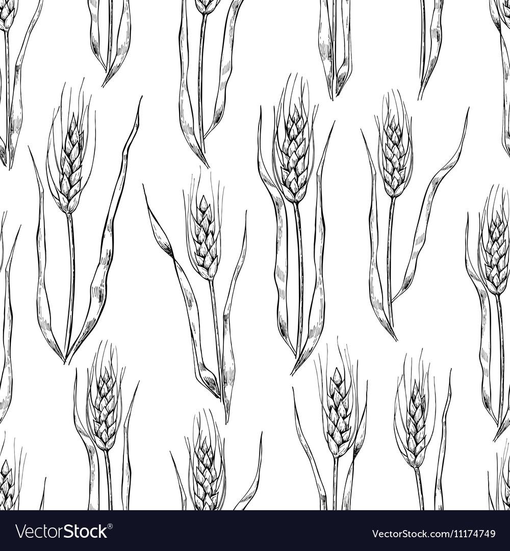 Hand drawn wheat ears seamlless pattern