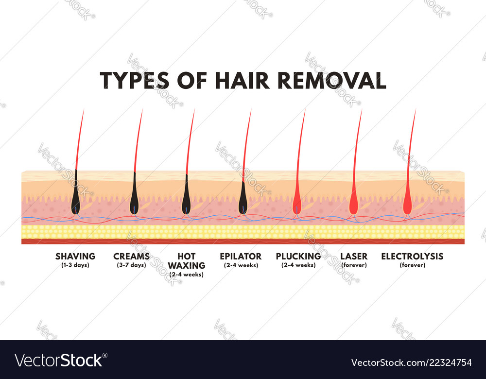 Hair removal concept shaving depilation cream Vector ImageVectorStock