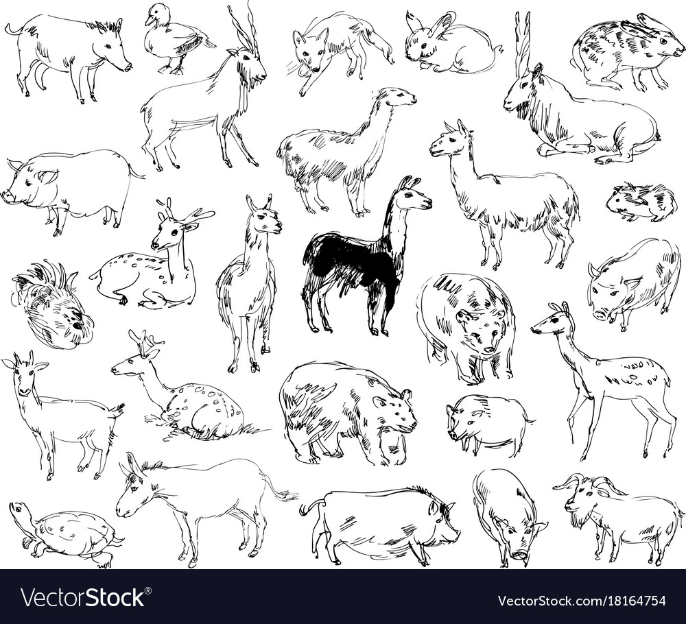 Getdrawings Wild Animals Zoo Set Handdrawn Vector Image Vectorstock Wild Animals Zoo Set Handdrawn Royalty Free Vector Image