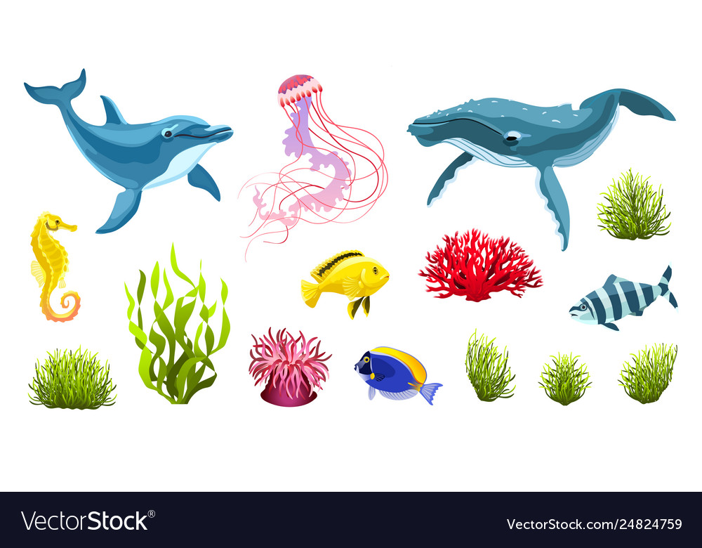 Sea life isolated