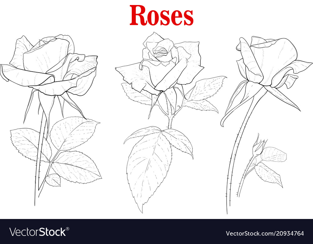 Set rose flowers
