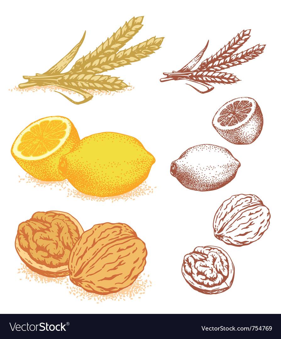 Grains lemons walnuts vector image