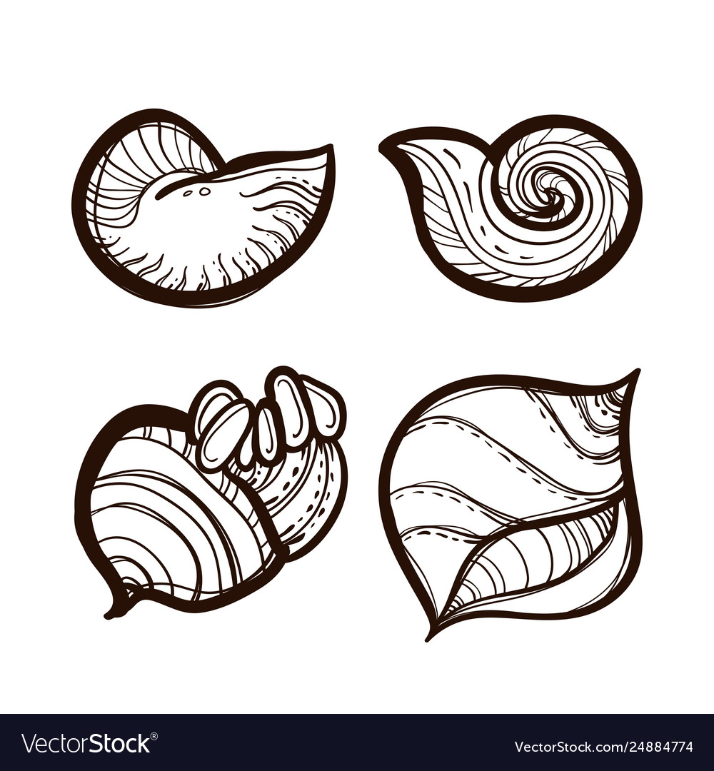 Collection various seashells coloring book